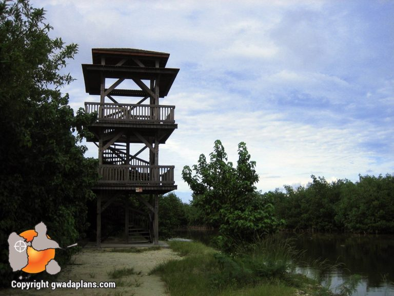 Mangrove - Port Louis