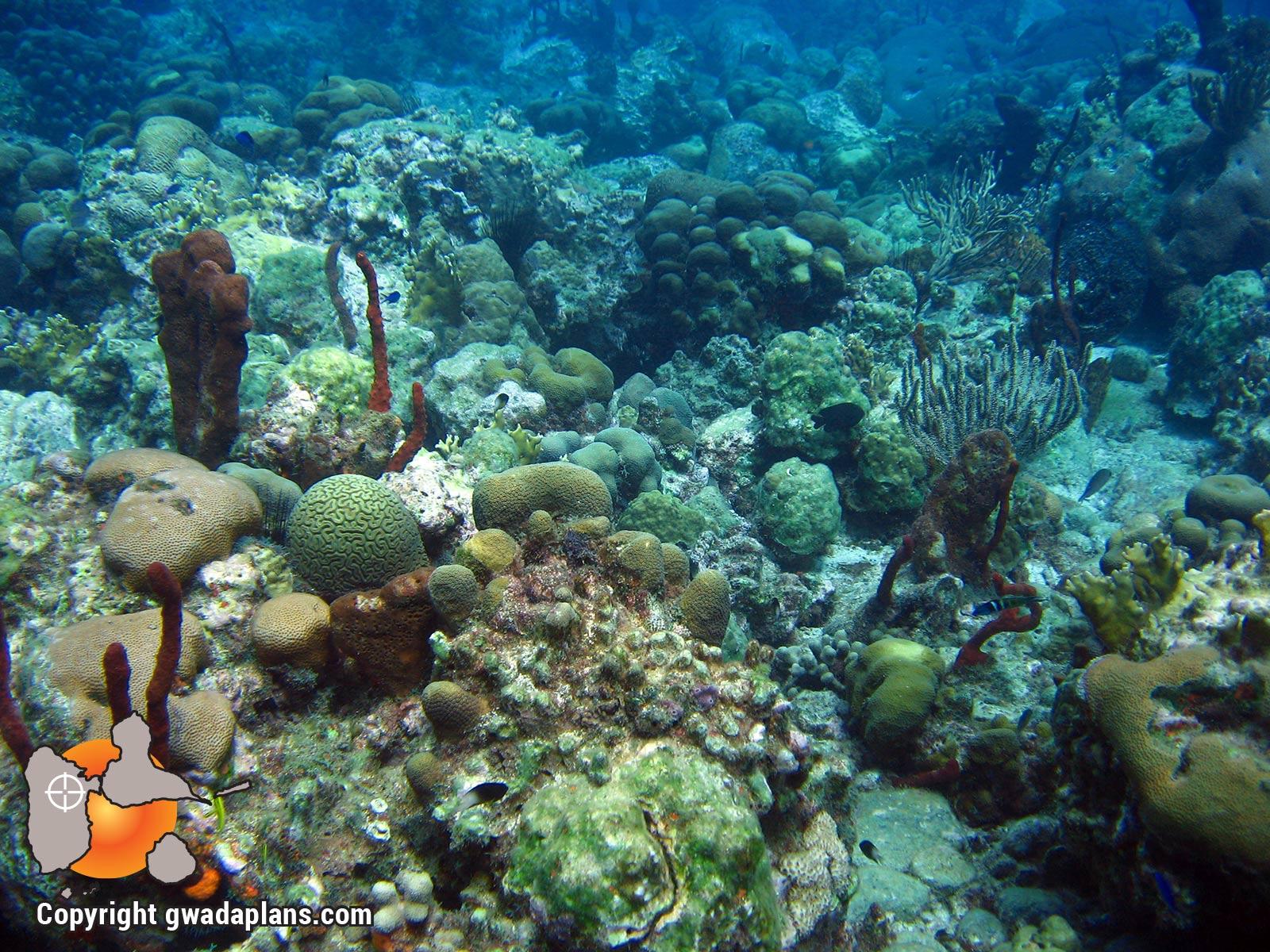 Paysage des récifs