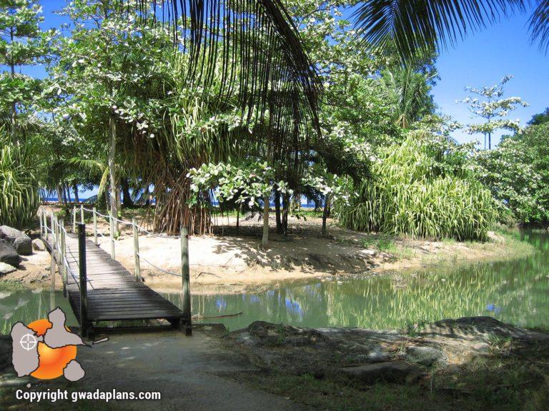 Plage de Grande-Anse - Mangrove