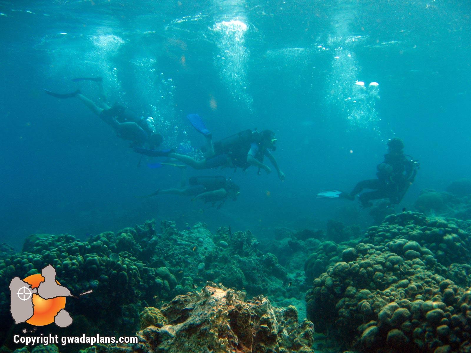 Plongeurs Guadeloupe
