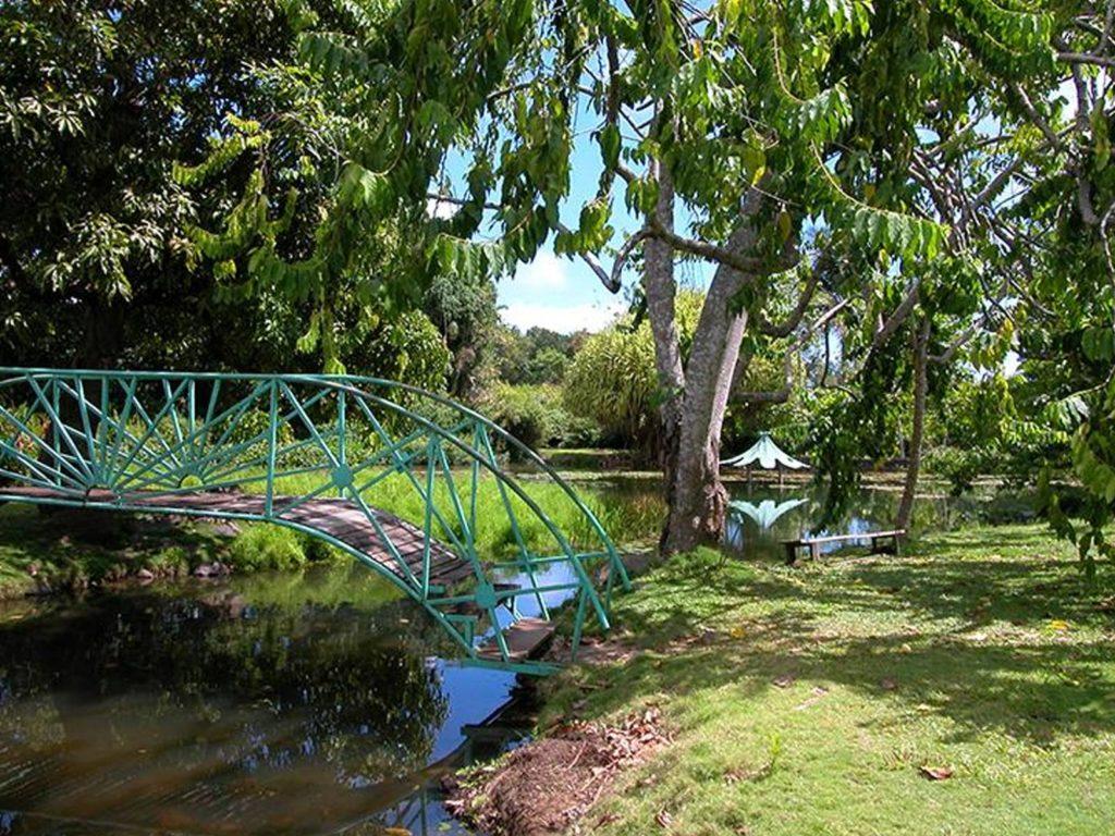 Jardin d'eau - Goyave
