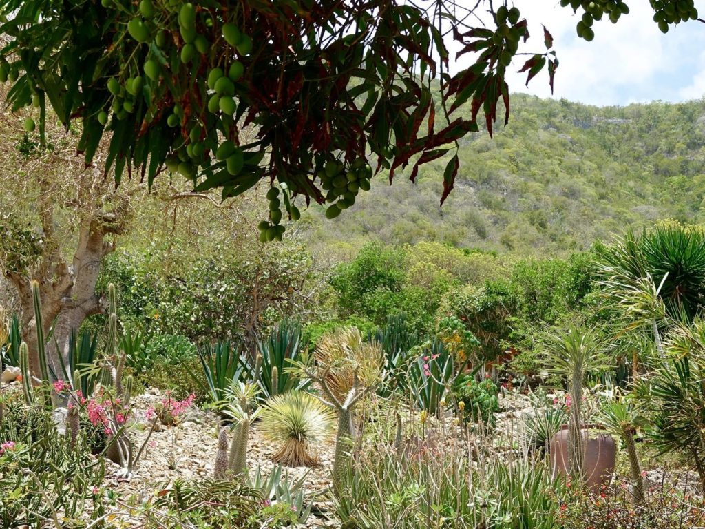 Jardin botanique du désert - La Désirade