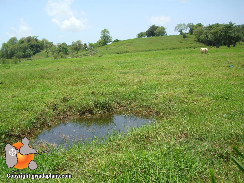 Plaines agricoles - Les Abymes