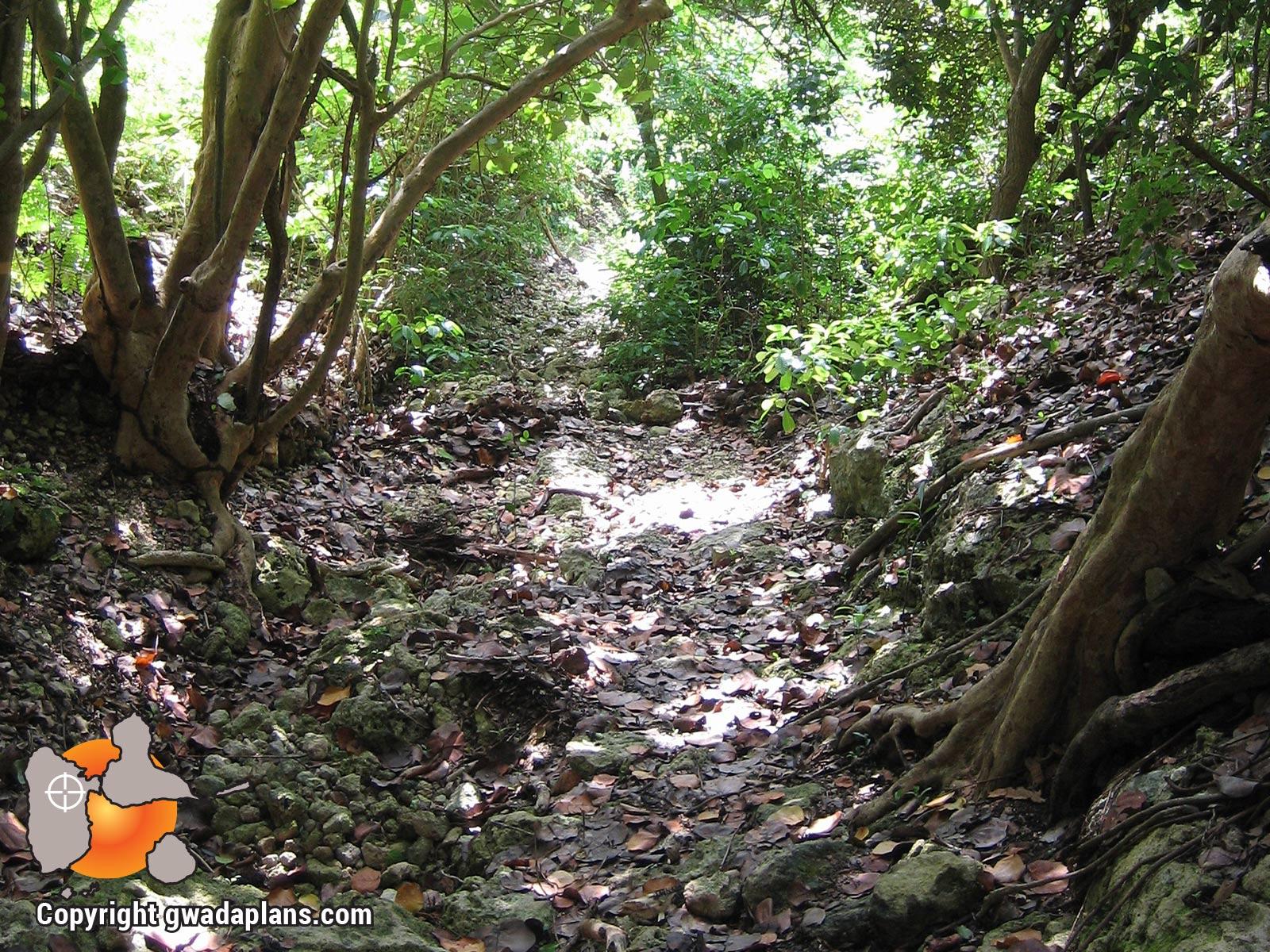 Sentier de la Pointe Tali - Marie Galante