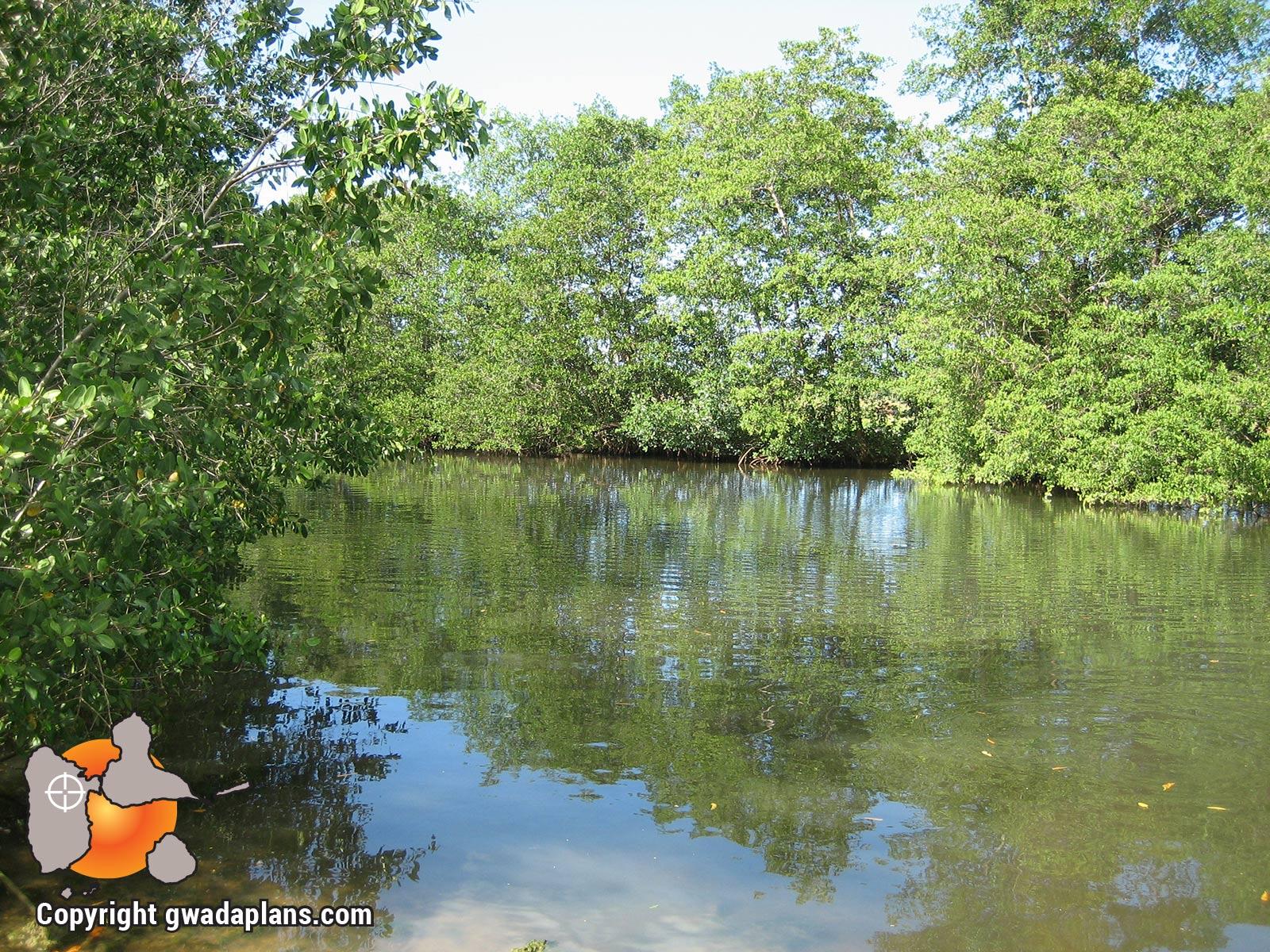Le canal se termine en mangrove
