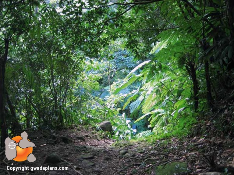 Sentier Cascade Vauchelet - Guadeloupe