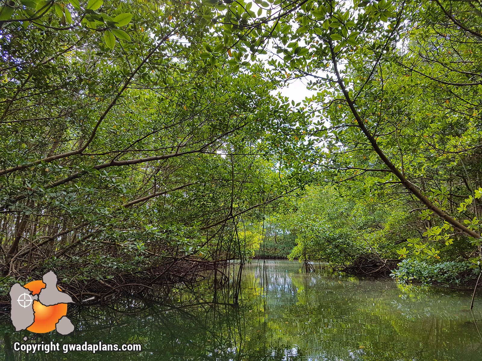 Réserve Marine Guadeloupe - Mangrove