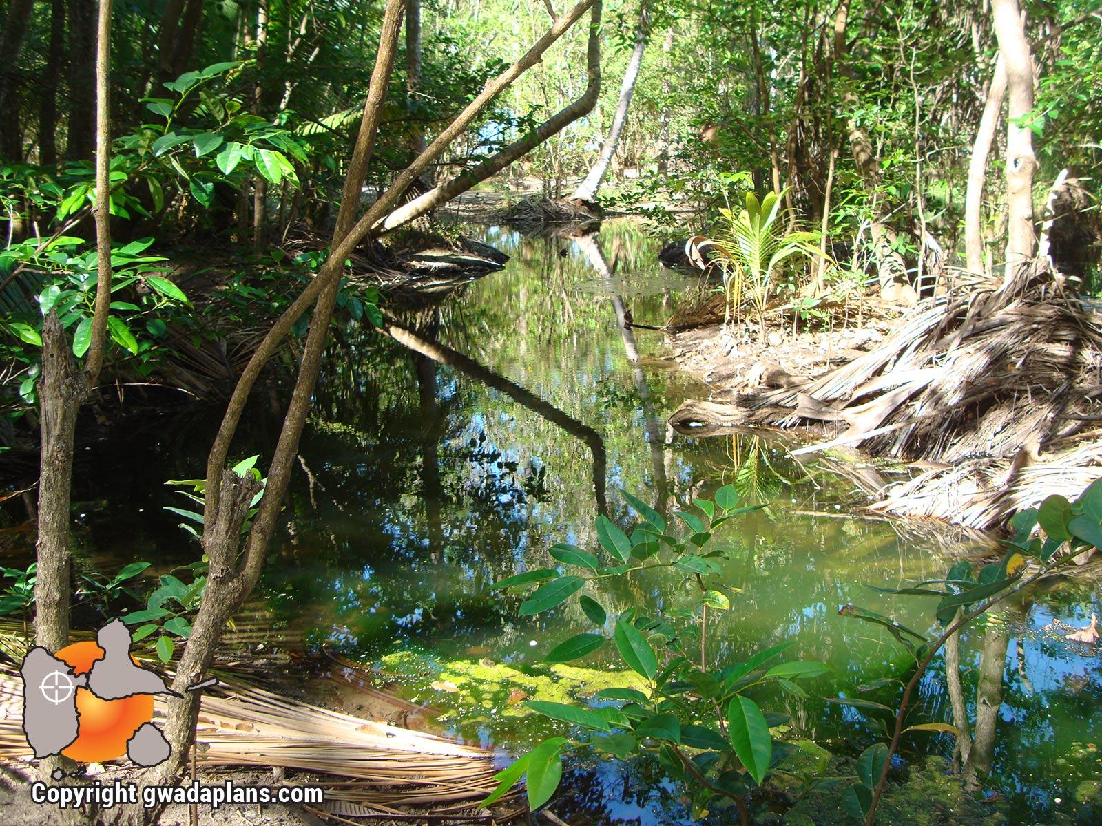 La mangrove de la cocoteraie de l'Anse à la Barque