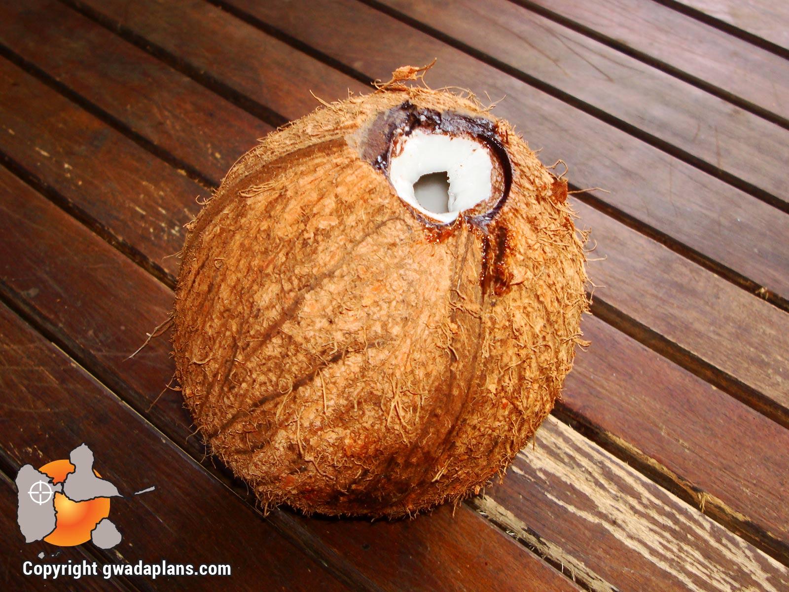Noix de coco sèche - Gastronomie Guadeloupe