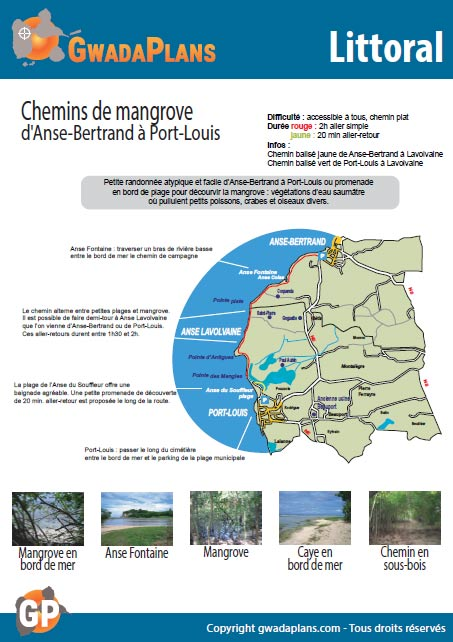 Chemins de mangrove - Balade sur le littoral de Guadeloupe