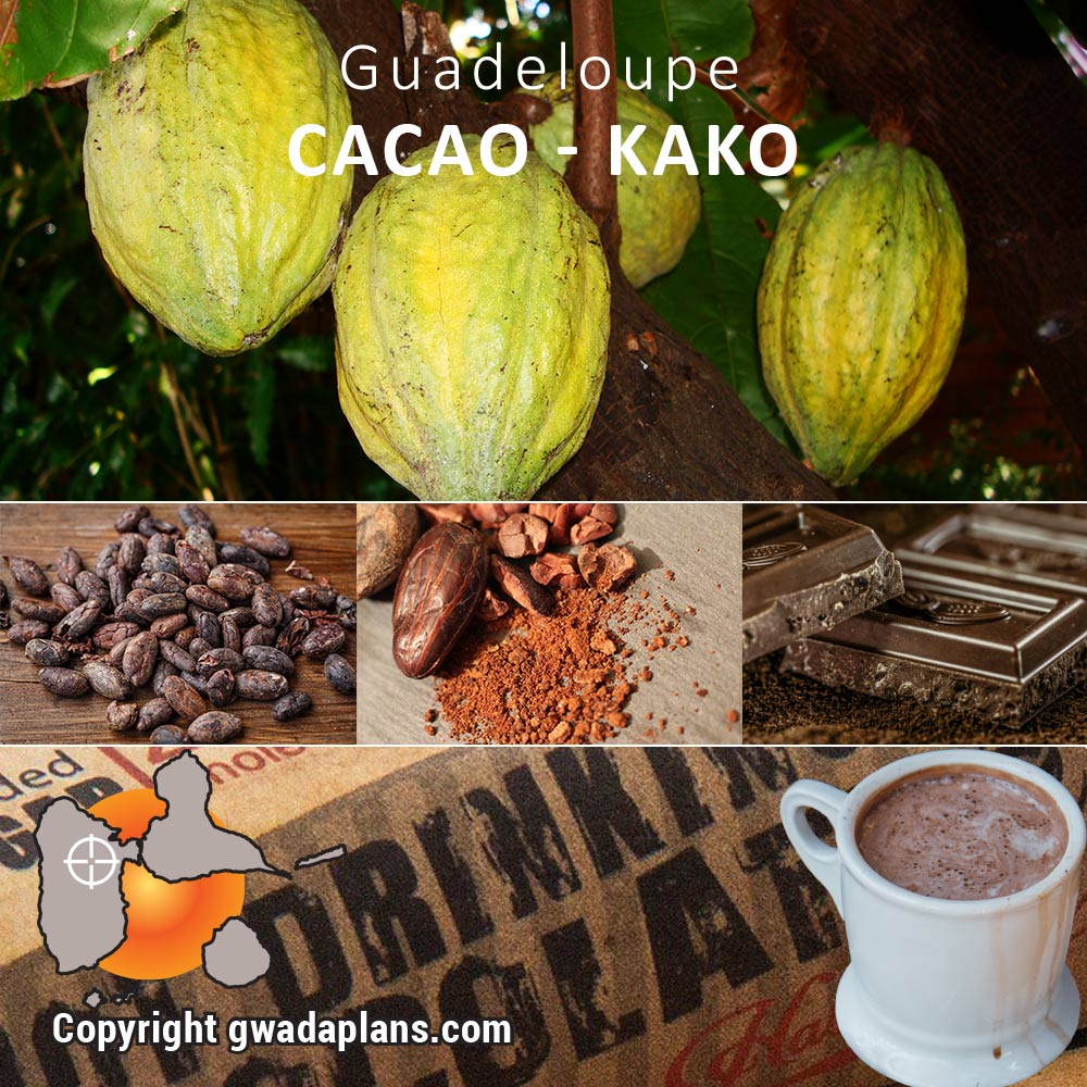 Cacao - Kako Guadeloupe